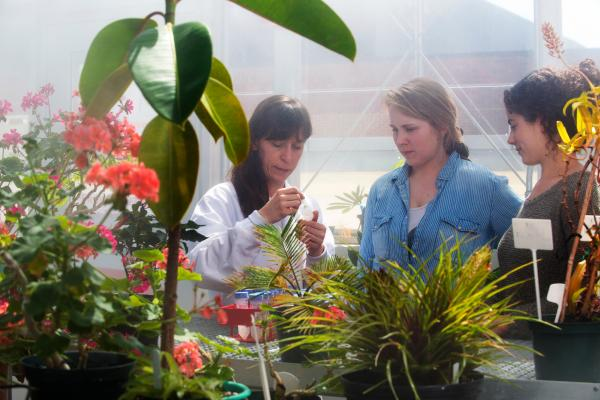 Biology students work with a professor to examine plant defenses and plant-bacteria interactions in our on-campus greenhouse