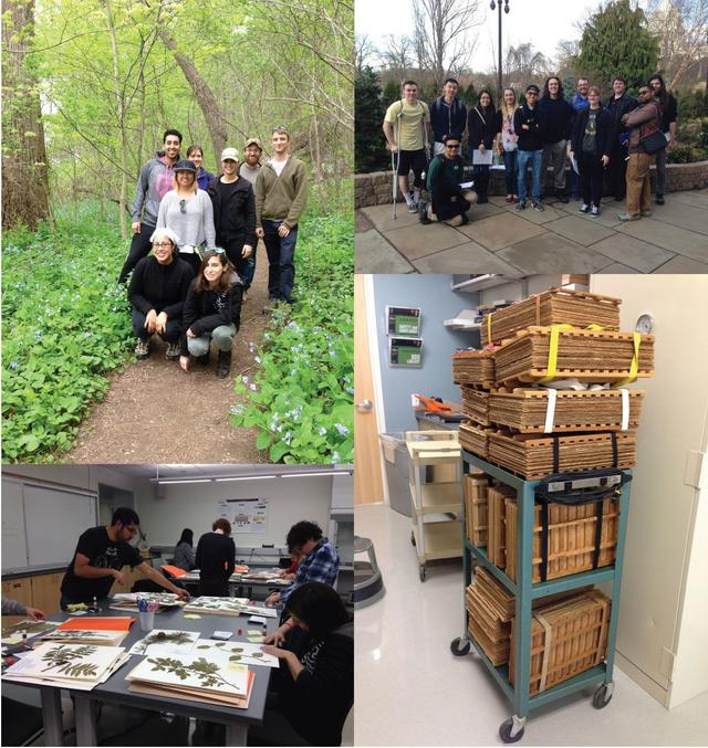 Clockwise from top left: 2015 BIOL344 class field trip to Turkey Run Park; 2017 BIOL344 class field trip to the US Botanical Garden; herbarium presses for 2015 BIOL345 class project; students from 2015 BIOL345 preparing their herbarium specimens