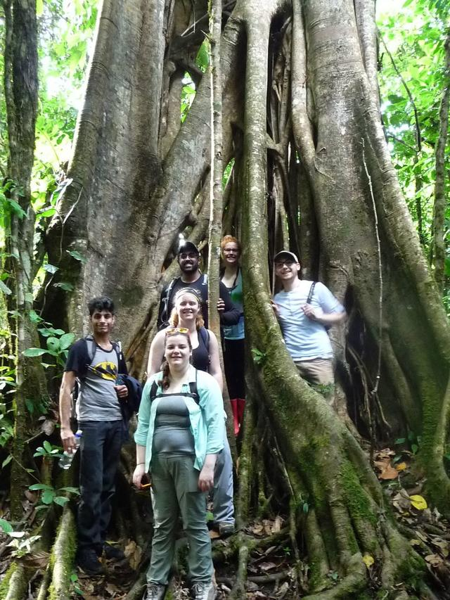 The students in a strangler fig tree in San Vito. Pictured L-R: Vin Singh, Lynn Bonomo, Megan Barlow, Nick Sharma, Lauren Brown, Jonathan Clark