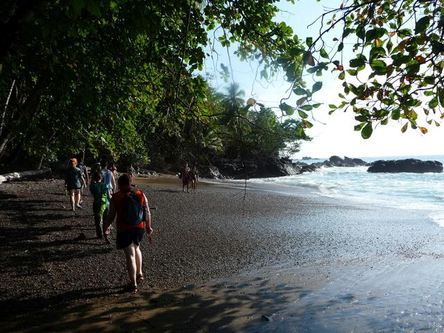 Walking along the beach on the Oso peninsula. Pictured L-R: Lauren Brown, Nick Sharma, Jimmy (guide), Dr. Rebecca Forkner, Jonathan Clark, Lynn Bonomo