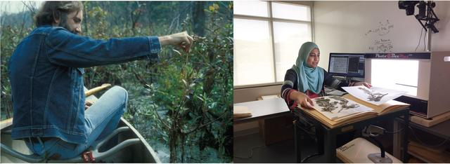 Left: Dr. Ted Bradley collecting plants in the 1970's. Right: Mason undergraduate student digitizing herbarium specimens