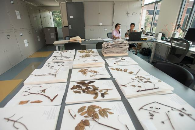 Herbarium specimens at the Ted R. Bradley Herbarium in Exploratory Hall.